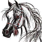Stacey Mayer - Arabian Horse