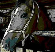 Animal Shelter Digital Art - Arabian Mare by George Pedro