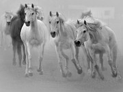Horses Photographs Digital Art - Arabian Mares by El Luwanaya Arabians
