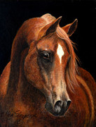 Chestnut Horse Paintings - Arabian Portrait  by Ellen Strope