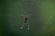 Arachnid Framed Prints - Arachnid Framed Print by Bob Christopher