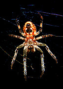 J.p. Prints - Arachnid Undercarriage Print by Mark J Seefeldt