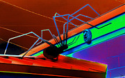 Colorful Art Digital Art - Arachnophobia by David Lee Thompson