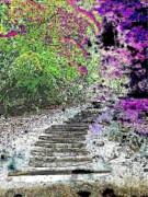 Arbor Pathway Print by Tim Allen