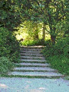 Pathway Digital Art - Arboretum Steps by Tim Allen