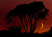Matt Dobson Prints - Arbutus Sunset Print by Matt Dobson