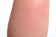 Finger Prints - Arch Fingerprint Pattern Print by Photo Researchers, Inc.