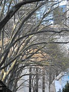Bryant Park Prints - Arched Trees Print by Kimberly Perry