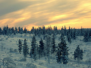 Cold Temperature Art - Arctic At Twilight by Joel Lunt
