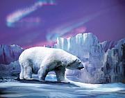 Northern Lights Mixed Media Posters - Arctic Chill 2 Poster by Jan Baughman
