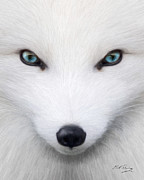 Canine Digital Art - Arctic Fox by Bill Fleming