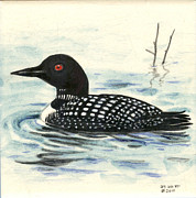 Arctic Ceramics - Arctic loon by Dy Witt