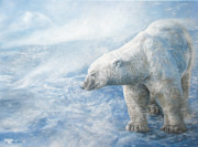 Polar Bear Framed Prints - Arctic Sovereign Framed Print by Cara Bevan