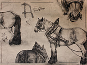 Horse Drawing Prints - Ardennais Print by Nadine Thome