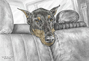 Canine Drawings Framed Prints - Are We There Yet - Doberman Pinscher Dog Print color tinted Framed Print by Kelli Swan