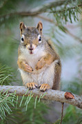Chipmunk Photos - Are You Looking at Me by Tara Turner
