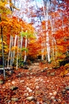 New Hampshire Art - Arethusa Falls Trail by Greg Fortier