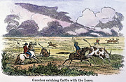 Roping Horse Prints - ARGENTINA: GAUCHOS, 1853. Gauchos catching cattle on the Argentine pampas. Wood engraving, American, 1853 Print by Granger