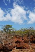 Arid Landscape On North Seymour Island Print by Sami Sarkis