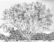 Jim Hubbard - Arizona - Palo Verde