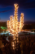 Arizona Art - Arizona Christmas Tree by Jacek Joniec