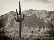 Southwestern Photograph Posters - Arizona Desert Poster by Methune Hively