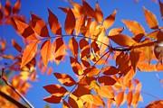 Arizona Fall 1 Print by David Rizzo