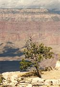 Marilyn Wilson - Arizona Grand Canyon