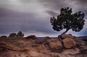 Robert Schambach - Arizona Lone Tree Sunset