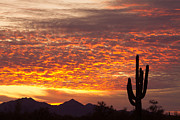Desert Sunsets Acrylic Prints - Arizona November Sunrise With Saguaro   Acrylic Print by James Bo Insogna