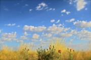 Prescott Posters - Arizona Sky And Golden Grass Poster by Gus McCrea