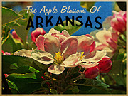 Arkansas Digital Art Metal Prints - Arkansas Apple Blossoms Metal Print by Vintage Poster Designs