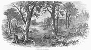 Arkansas Prints - Arkansas: Sunken Lands Print by Granger
