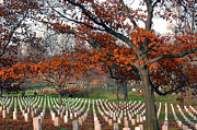 Tombstones Posters - Arlington Cemetery in Fall Poster by Carolyn Marshall