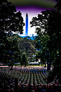 National Mall Framed Prints - Arlington Framed Print by David Hahn