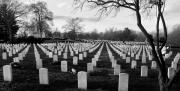 Arlington Metal Prints - Arlington National Cemetery Metal Print by Todd Fox