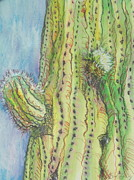 Saguaro Metal Prints - Arm Bud Metal Print by Sandy Tracey