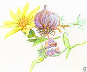 Illustration Pastels Prints - Arnica Garlic Thyme and Comfrey Print by Cameron Hampton PSA