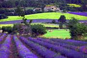 Lavender Originals - Aromatique by John Galbo