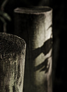 Fence Post Photos - Around Here We Whisper by Odd Jeppesen