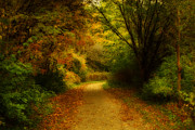 Autumn. Fall Colors - Around the Bend - Landscape by Anthony Rego