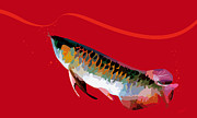 Fish Mixed Media Framed Prints - Arowana-01-red Framed Print by Eakaluk Pataratrivijit