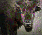 Bison Mixed Media Framed Prints - Art Neuvo Bison Framed Print by Irma BACKELANT GALLERIES