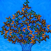 Subtle Colors Prints - Art style butterflies.9 Print by Susana Sanchez Giraud