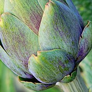 Italian Kitchen Prints - Artichoke Abstract Print by Jenny Hudson