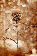 Featured Metal Prints - Artichoke Bloom Metal Print by La Rae  Roberts