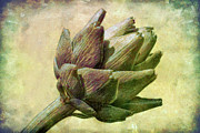 Globe Photo Framed Prints - Artichoke Framed Print by Susan Isakson