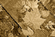 Fallen Leaf Photos - Artsy Monochrome Antique Leaf by M K  Miller