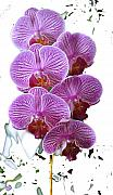 Orchids Digital Art Prints - Artsy Orchid Print by Vijay Sharon Govender