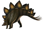 Dinosaur Illustration Posters - Artwork Of A Stegosaurus Dinosaur Poster by Mark Garlick